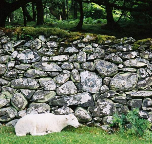 acts_as_agile_stone_wall_600_569.JPG